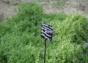 Medicinal Plants - Swat